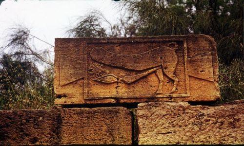 Zdjecie LIBIA / trypolitania / Laptis Magna / drowskaz