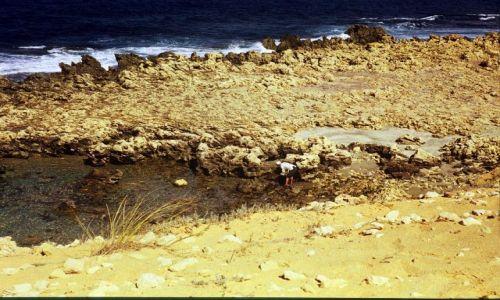 Zdjęcie LIBIA / trypolitania / okolice Trypolisu / połów