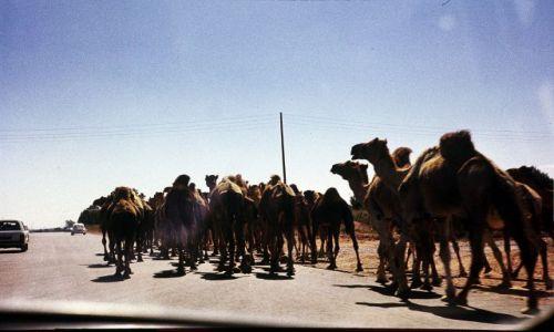 Zdjęcie LIBIA / trypolitania / Trypolis / na rzeź