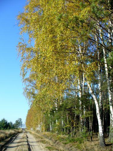 Zdjęcia: gdzieś przy lesie, Droga, LITWA