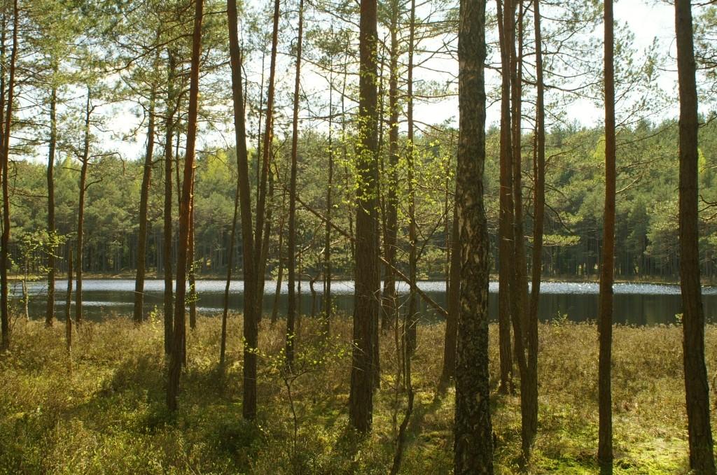 Zdjęcia: okolice Stripeikiai, Auksztocki Park Narodowy, staw w lesie, LITWA