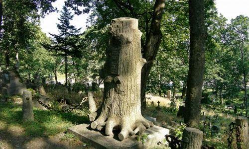 Zdjecie LITWA / -Wilno / Rossa / Drzewo