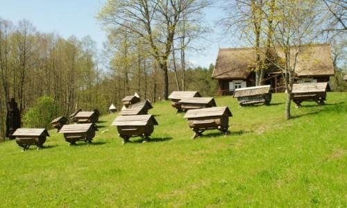 Zdjecie LITWA / Auksztocki Park Narodowy / Stripeikiai / Muzeum Pszczela