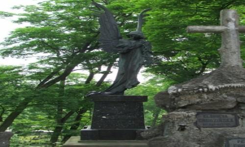 Zdjecie LITWA / - / Wilno, Cmentarz na Rossie / Czarny Anioł