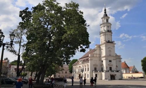 Zdjecie LITWA / okręg kowieński / Kowno / Biały łabędź