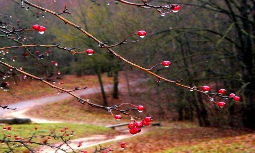 Zdjęcie LITWA / Wilno / . / jesienne Wilno - wypatrzone w deszczu