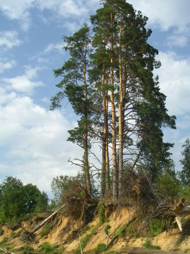 Zdj�cia: Nad Gauj�, Drzewo, �OTWA