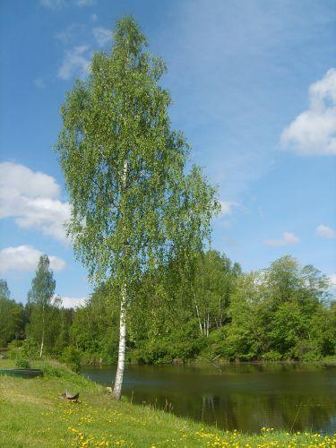 Zdjęcia: Łotwa, W drodze powrotnej.........Łotwa 2, ŁOTWA
