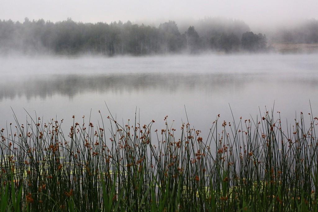 Zdjęcia: gdzieś w lesie, nad jeziorem..., wschodnia część..., W drodze do Rosji....., ŁOTWA