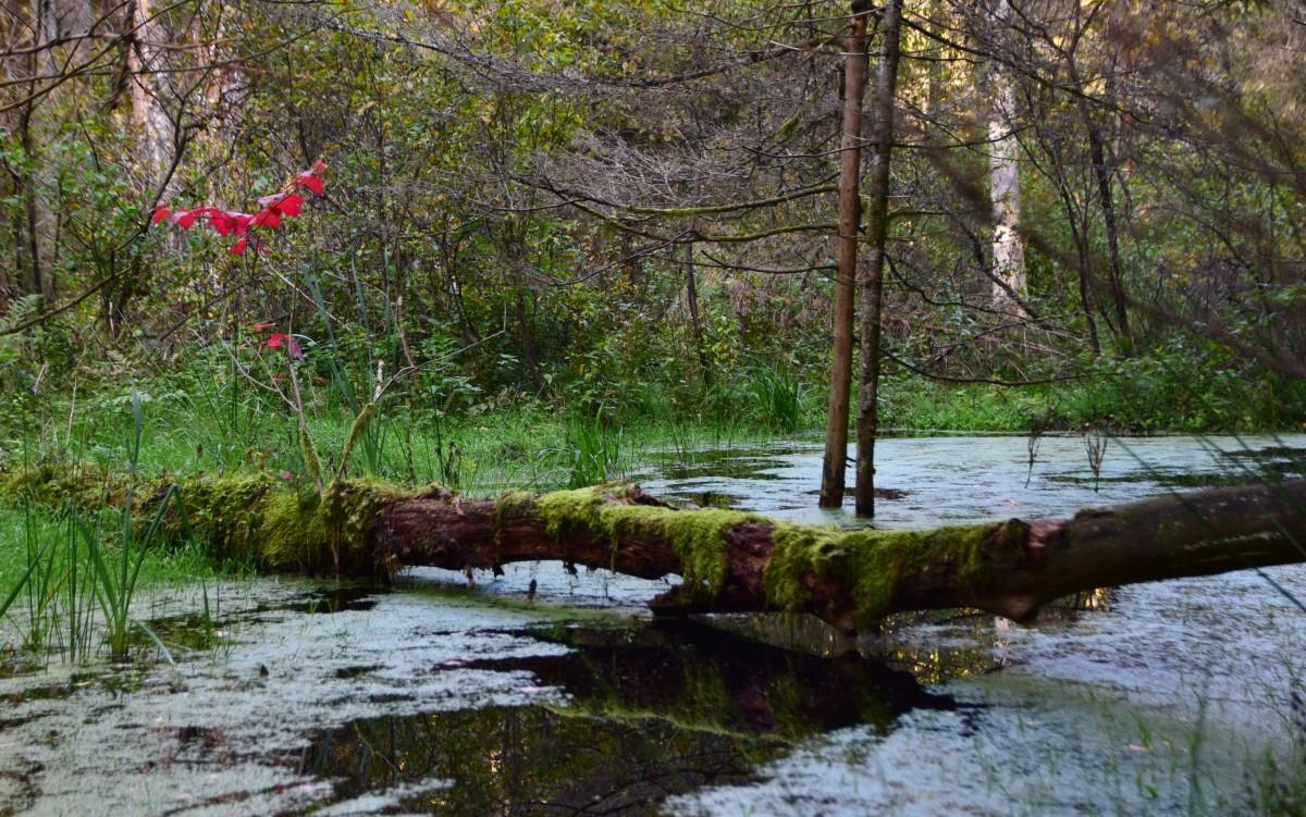 Zdjęcia: Park Narodowy Kemeri, Okręg Jurmala, Bagno i czerwień, ŁOTWA