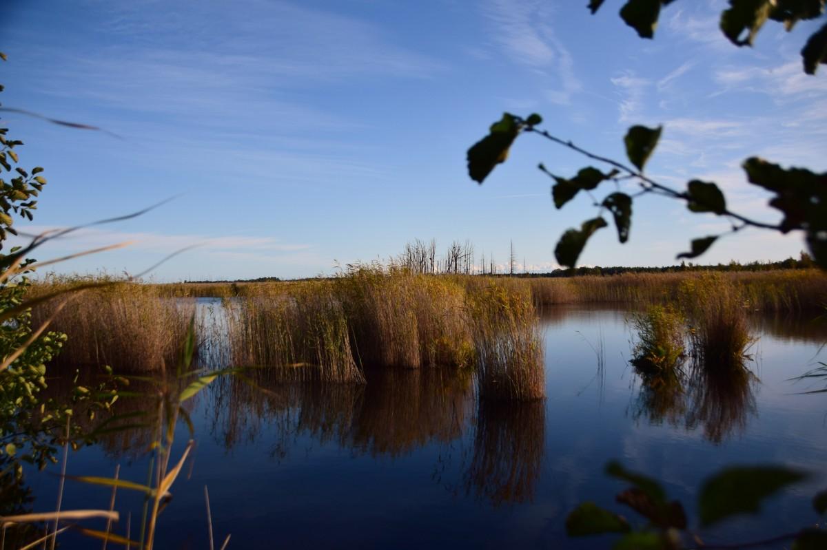 Zdjęcia: Park Narodowy Kemeri, Okręg Jurmala, Przez olchę, ŁOTWA