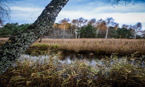 Zdjęcie ŁOTWA / Jurmala  / Park Narodowy Kemri / Park Narodowy Kemri