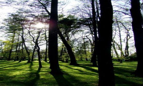 Zdjecie �OTWA / Lipawa / Lipawa / przez park...