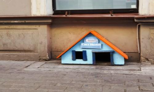 Zdjecie ŁOTWA / Ryga / Ryga / Cats Hostel