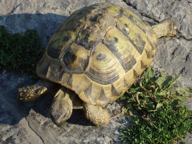 Zdjęcia: Ochryda (Ochrid), Ochryda, Żółwik, MACEDONIA