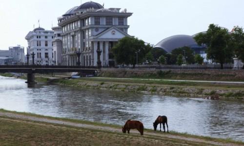 Zdjęcie MACEDONIA / Skopje / Nad rzeką Vardar / Cygańskie konie w centrum miasta