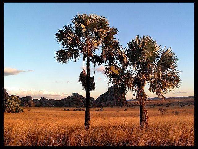 Zdjęcia: P. N. Isalo, Fianarantsoa, Krajobraz sawanny w Isalo N.P., MADAGASKAR