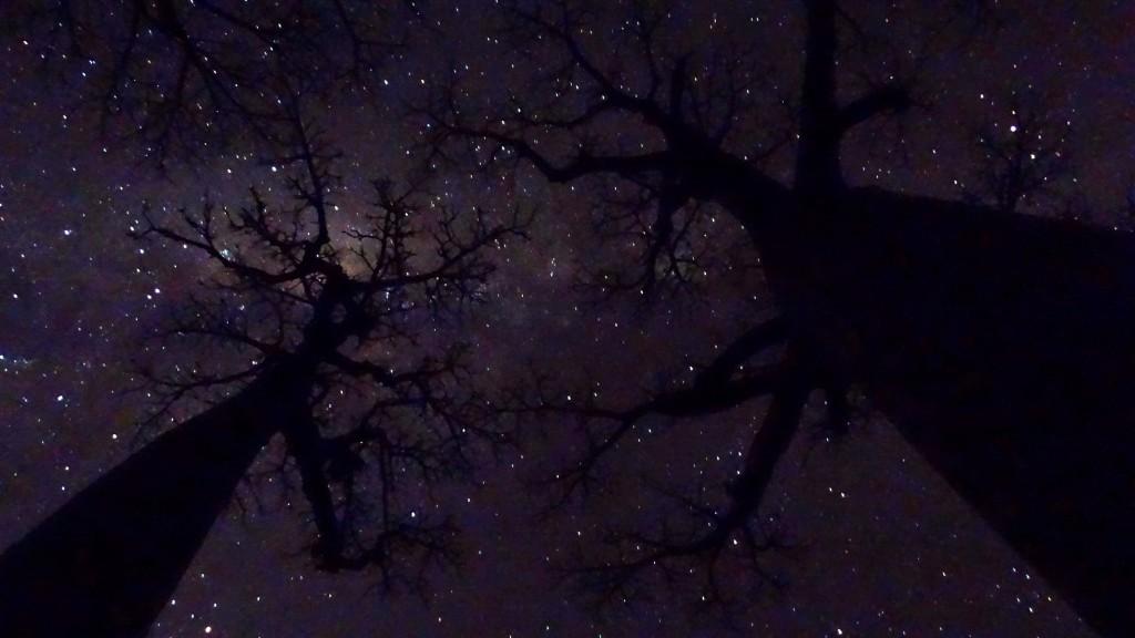 Zdjęcia: Aleja baobabów, Morondave, Noc wśród baobabów, MADAGASKAR