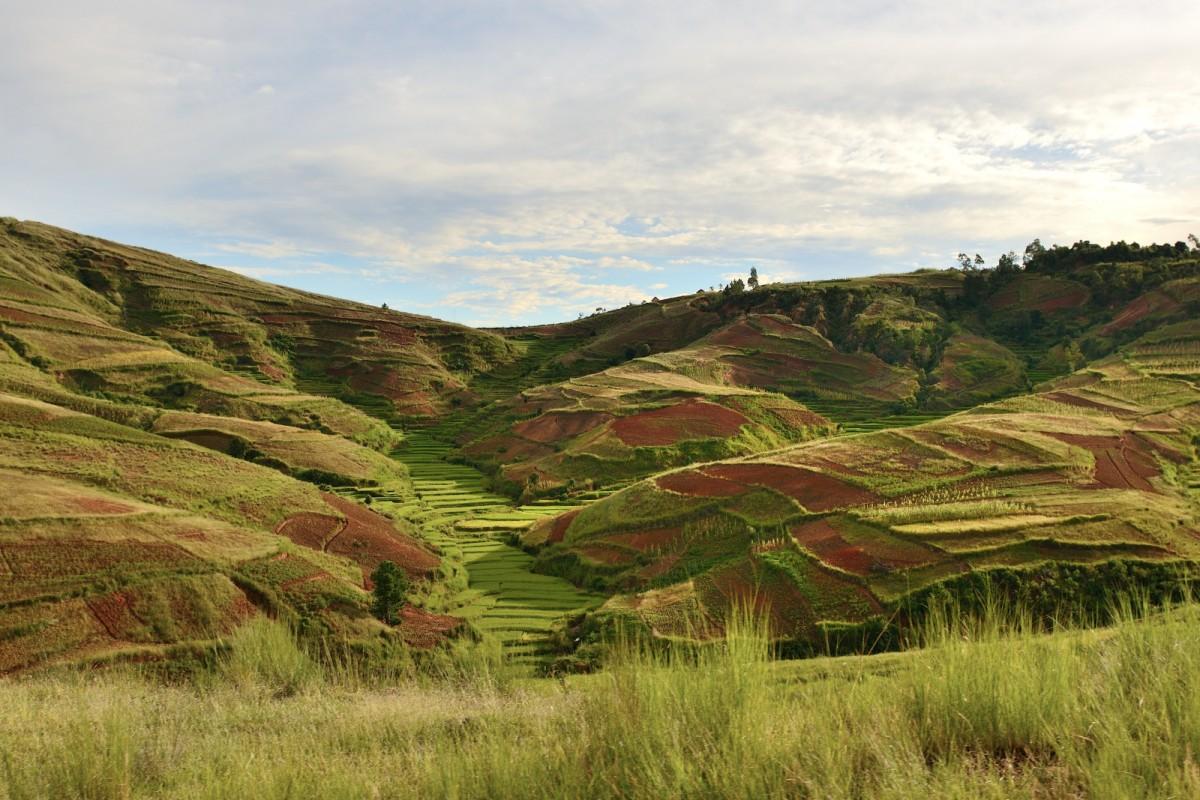 Zdjęcia: okolice miasta Mandoto, Vakinankaratra, Czerwona ziemia i pola ryzowe, MADAGASKAR