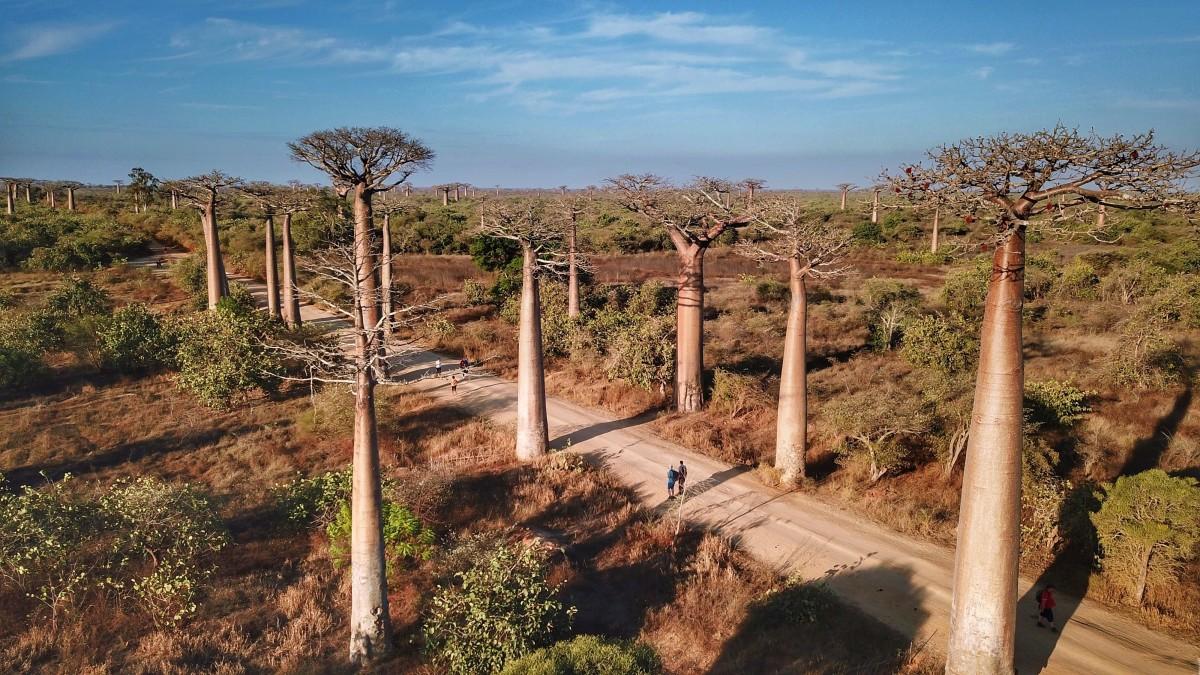 Zdjęcia: Aleja Baobabów, Toliara, Aleja Baobabów, MADAGASKAR
