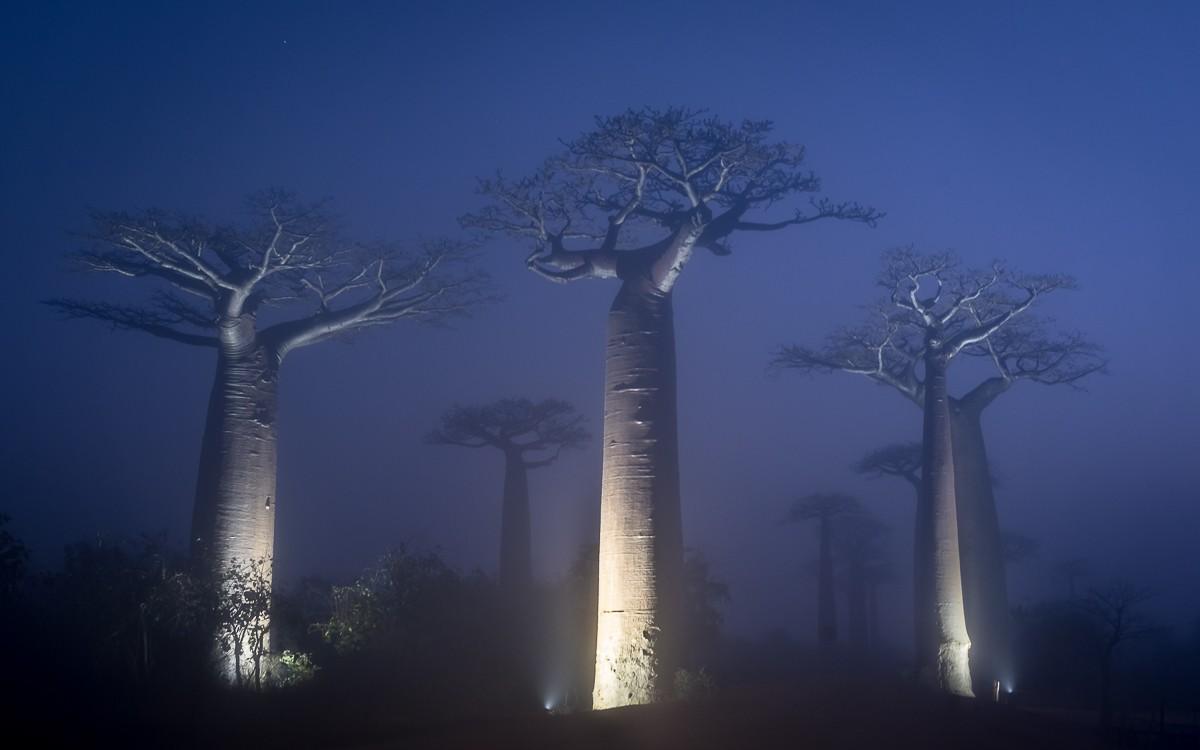 Zdjęcia: Aleja Baobabów, Menabe, iluminacja..., MADAGASKAR