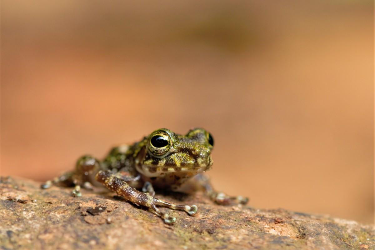 Zdjęcia: Parc National de Masoala, Północny Wschód, Pięciogroszówka ;-), MADAGASKAR