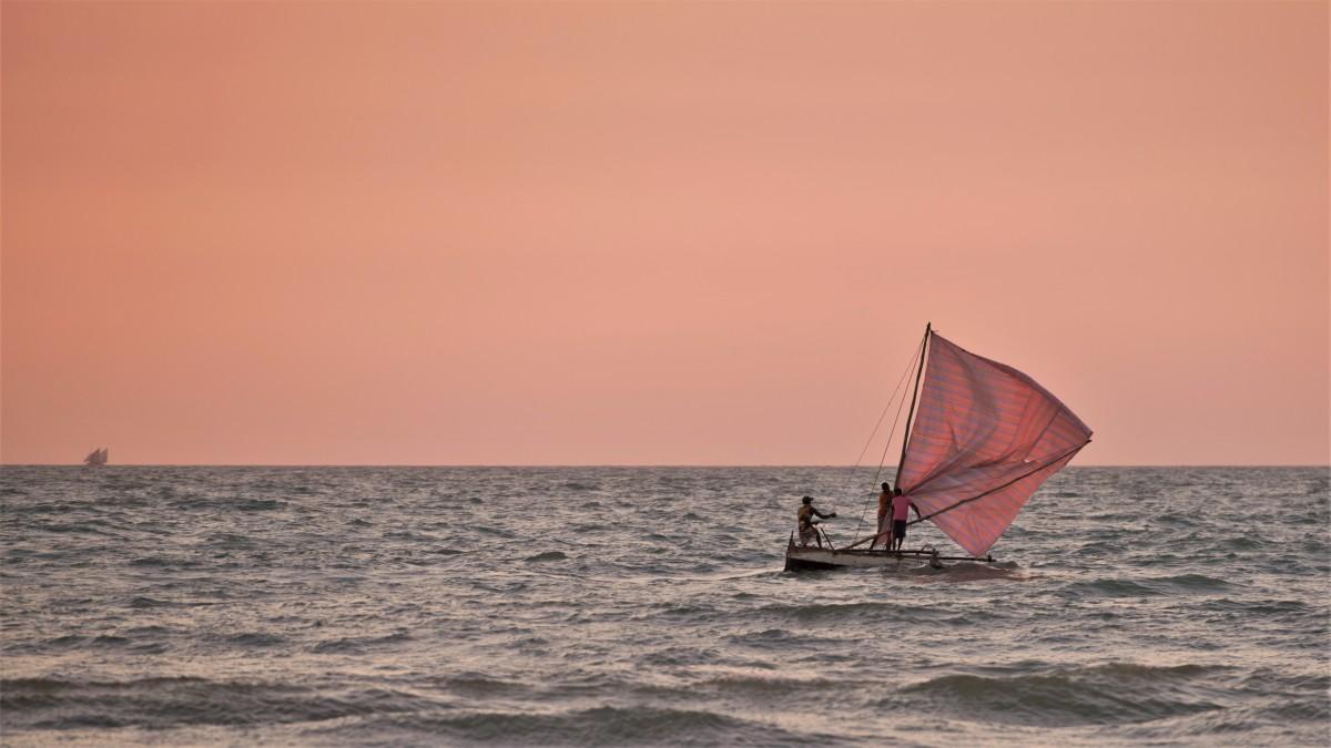Zdjęcia: Morondava, Zachodni, Rose ;-), MADAGASKAR