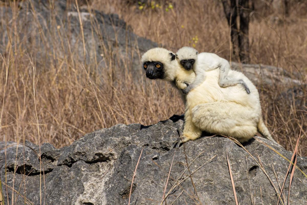 Zdjęcia: Grand Tsigny de Bamaraha, Bekopaka, Nie ma jak u mamy, MADAGASKAR