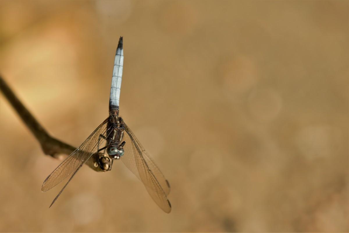 Zdjęcia: Parc National de Masoala, Północny Wschód, Caracal de Madagascar ;-), MADAGASKAR