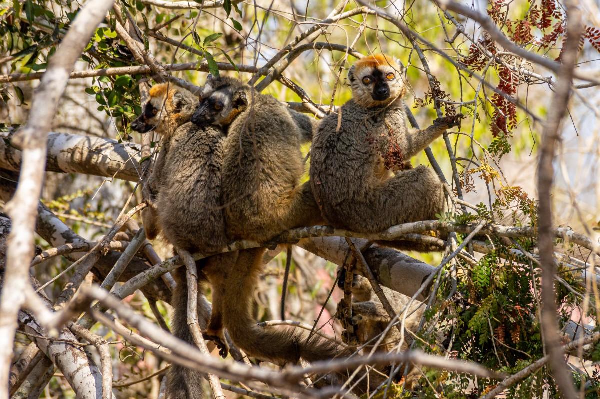 Zdjęcia: Kirindy Forest, Toliara, Co za jedni tam na dole?, MADAGASKAR