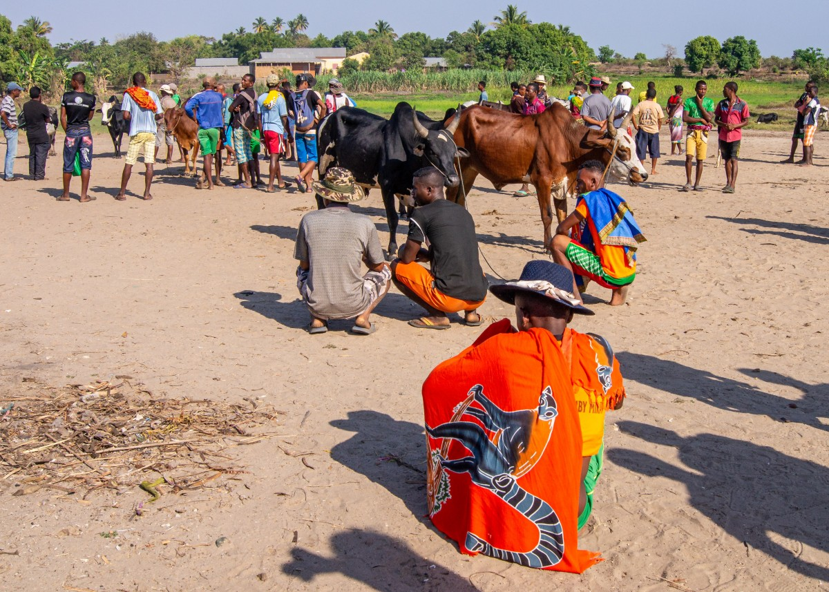 Zdjęcia: Mahabo, Toliara, Dobijanie targu, MADAGASKAR