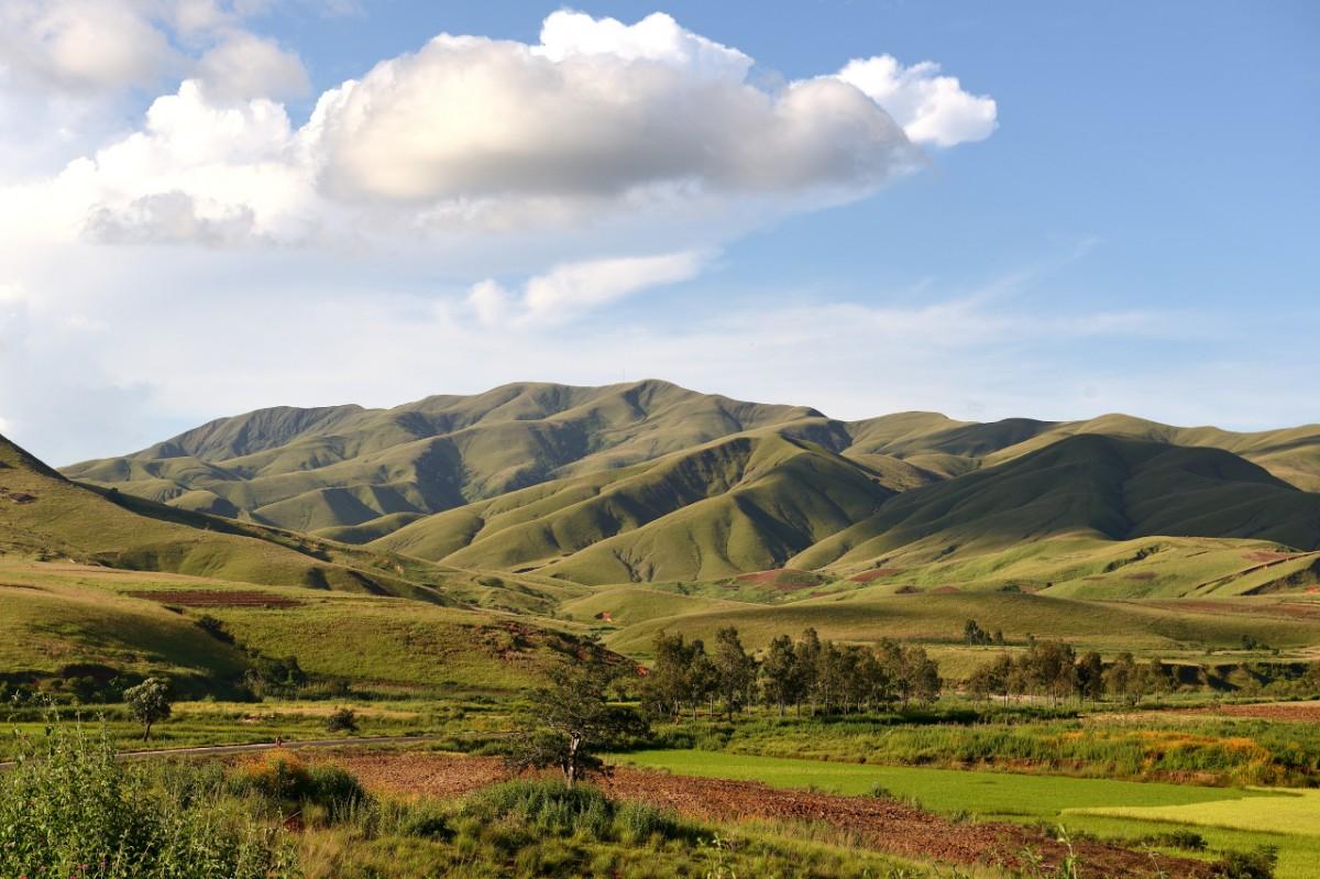 Zdjęcia: gdzieś po drodze, zachodni Madagaskar, Zielone cienie, MADAGASKAR