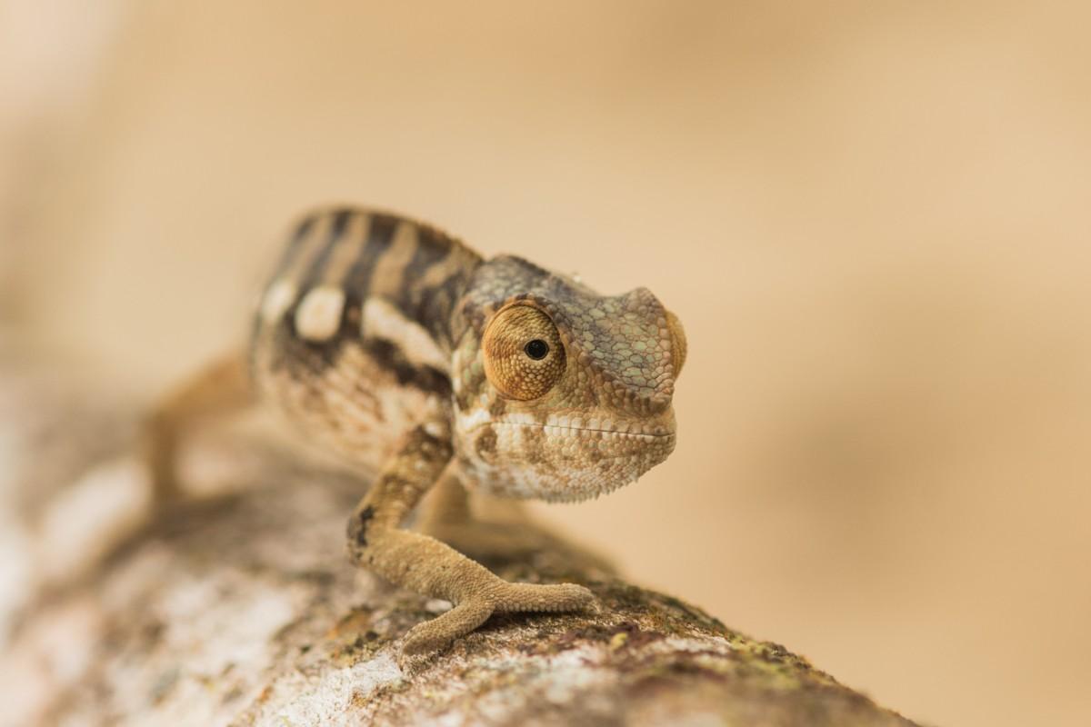 Zdjęcia: Parc National de Masoala, Pólnocny Wschód, Już za momencik ... 😁, MADAGASKAR