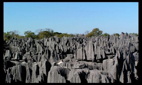 Zdjecie MADAGASKAR / Mahajanga / Tsingy of Bemaraha National Park / Tsingy2