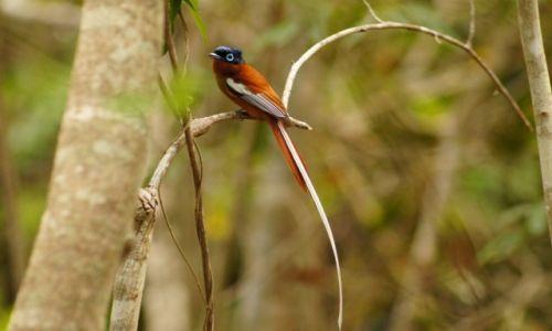 Zdjecie MADAGASKAR / - / Isalo National Park / Malagasy Paradi