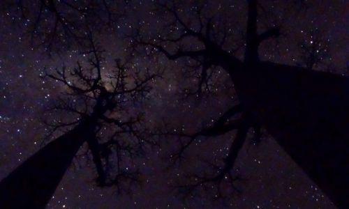Zdjecie MADAGASKAR / Morondave / Aleja baobabów / Noc wśród baobabów