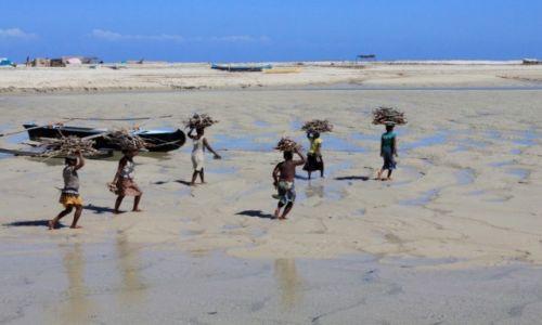 Zdjecie MADAGASKAR / południowy wschód / belo sur mer / dziewczyny niosą drewno w czasie odpływu