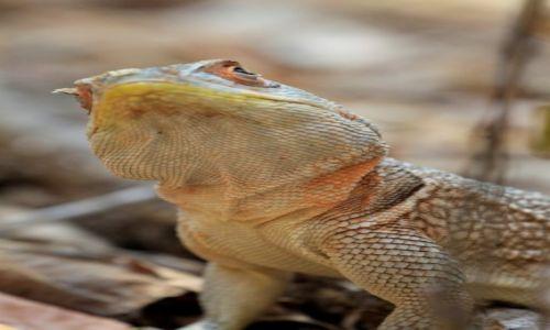 Zdjęcie MADAGASKAR / centralna część wyspy / Park Forestiere De Kirindi / nadziwić sie nie mogę