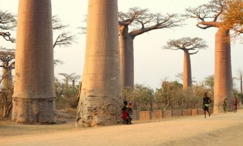Zdjecie MADAGASKAR / Morondawa / Morondawa / Baobabki:)