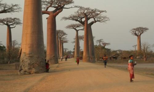 Zdjecie MADAGASKAR / Morondawa / Morondawa / Droga na Ostrołękę... Madagaskarską