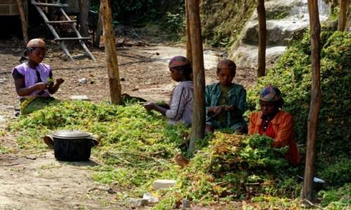 Zdjecie MADAGASKAR / Fianarantsoa / okolice Fianarantsoa / Przygotowanie do produkcji perfum