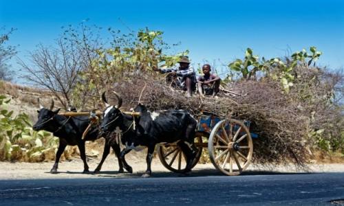 MADAGASKAR / IFATY / okolice Ifaty / Transport