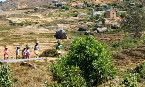 Zdjecie MADAGASKAR / Fianarantsoa / okolice Fianarantsoa /