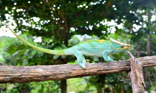 MADAGASKAR / Park Narodowy Ranomafana / przy drodze / Idę moro moro