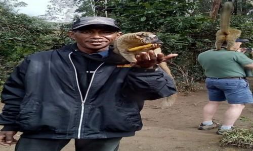 Zdjecie MADAGASKAR / - / Andasibe / Madagascar tours polska