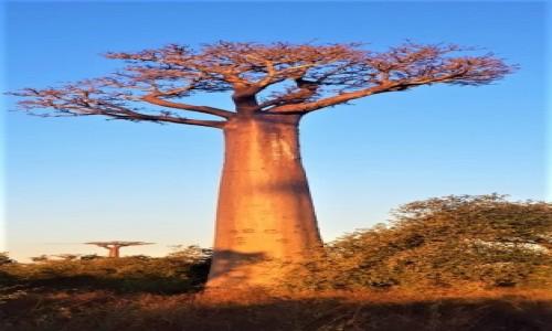 Zdjecie MADAGASKAR / morondawa  / morondawa / Madagaskar