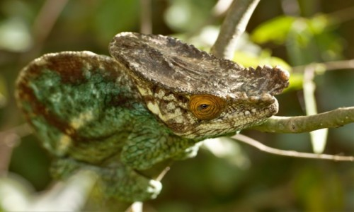 MADAGASKAR / Północny Wschód / Parc National de Masoala / Park jurajski ;-)