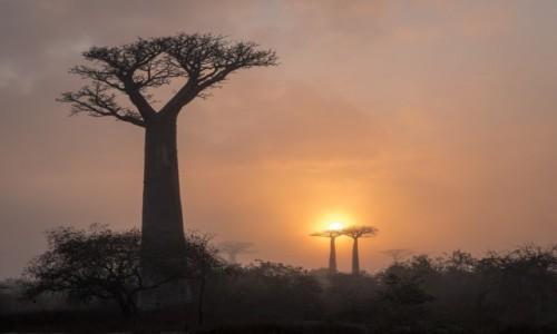 Zdjęcie MADAGASKAR / Menabe / RN8 / z mgieł...