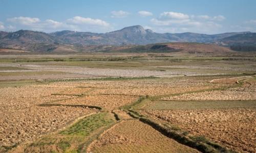 Zdjecie MADAGASKAR / Fianarantsoa / z pociągu / ryżowiska...