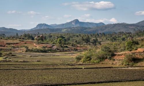 Zdjecie MADAGASKAR / Fianarantsoa / z pociągu / poletka...
